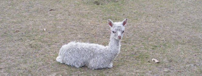 Cria Photos